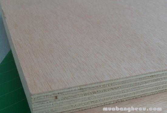 Poplar Plywood (ván ép được làm từ gỗ bạch dương)